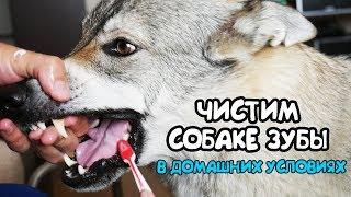 Чистим собаке зубы в домашних условиях