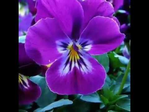 Bunga Bunga Yg Cantik Dan Indah Di Indoneaia Youtube