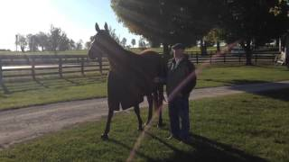 Beholder Looks Around Keeneland Oct. 21