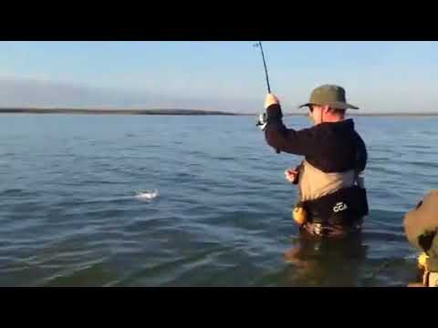 """The two person approach for landing a 30"""" trout. Congratulations, Jason!"""