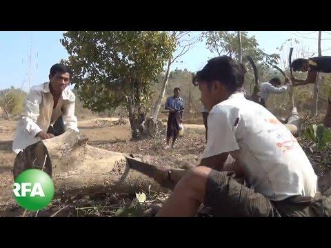 Deforestation Leaves Barren Hills in Myanmar's Rakhine State