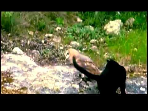 Cat&Owl Kariya I love u