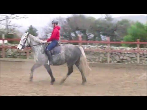 video Rio Irish Sport Horse gelding