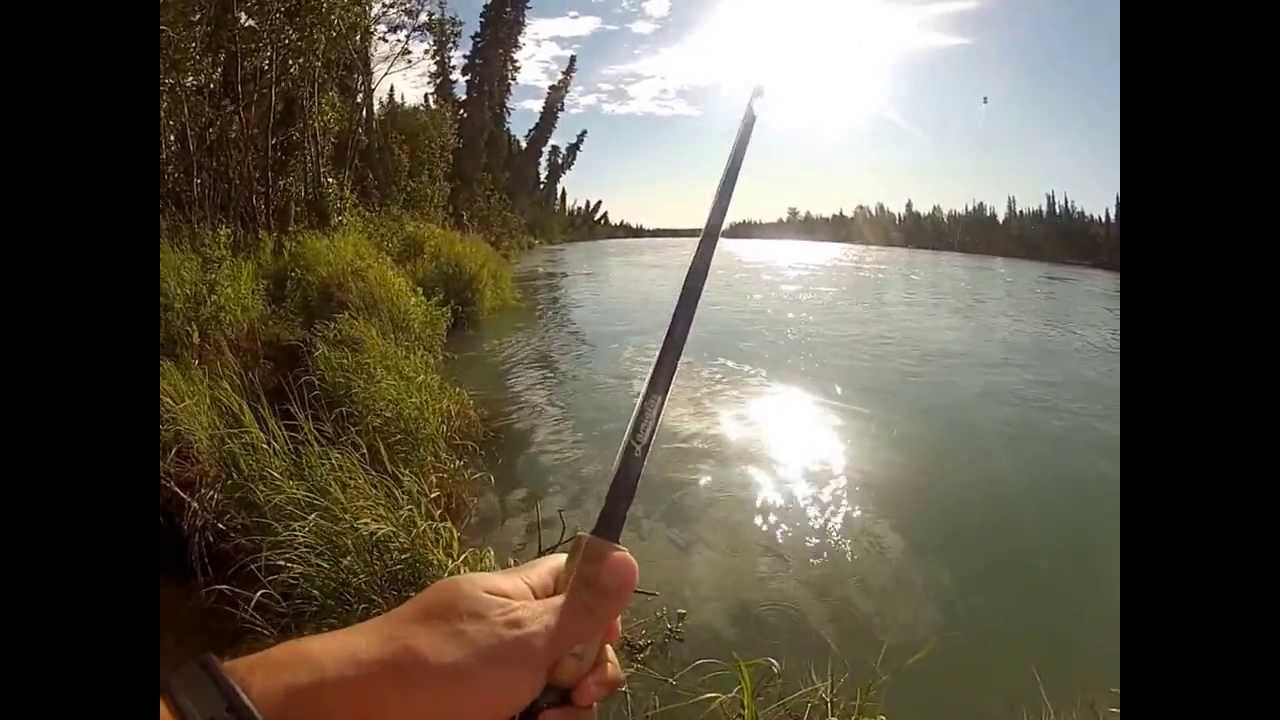 Kenai river alaska fishing july 2013 sockeye salmon for Kenai river fish counts