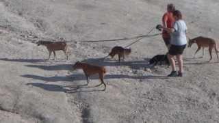 В Испании собаки - любимые животные, Espana(http://www.BFoto.ru/fotograf_spain.php - Профессиональный фотограф в Испании, Коста Бланка http://espana-live.com/ - Сайт про Испанию!..., 2013-09-25T18:54:02.000Z)