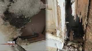 I-Team: 'Newly-renovated' House Turns Out To Be Mold House