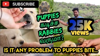 How to control puppies bite || Tamil || YouTribers