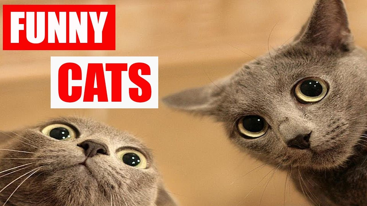 TOP FUNNY CATS TRY NOT TO LAUGH CHALLENGE CAT VIDEOS ... Funny Cat Videos Episodes