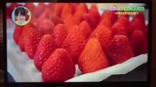 愛媛県のローカル番組「よるマチ!」 2018年3月14日放送 '' 笑顔満開!...