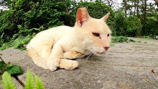 公園のウッドデッキの上で老猫と巨漢猫が気持ちよさそうにお昼寝する