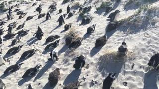 South Africa - Boulders Beach, Simon's Town 6-12-14