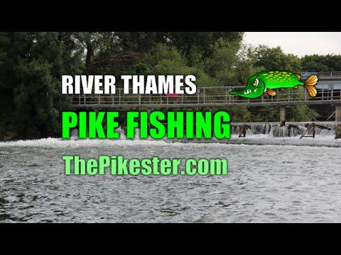 River Thames Pike Fishing (1)
