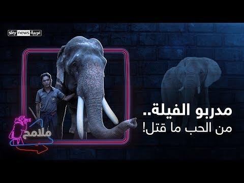 ملامح| مدربو الفيلة.. من الحب ما قتل!  - نشر قبل 3 ساعة