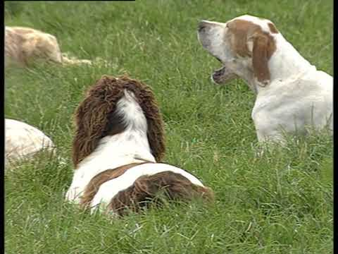 Working pointers and setters at Advie Gundogs
