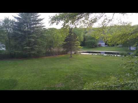 Monroe CT Bear sighting