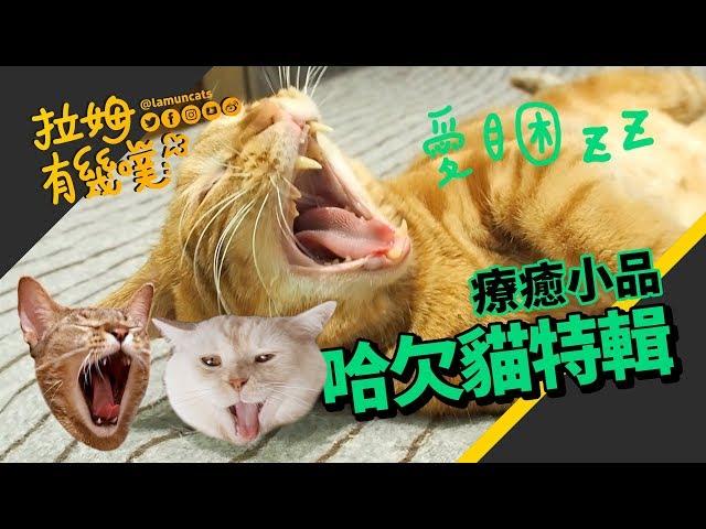 ►拉姆有幾噗◄ 失眠救星!超催眠療癒吸貓片 貓咪哈欠特輯┃The special collection of kitty's yawn ♡