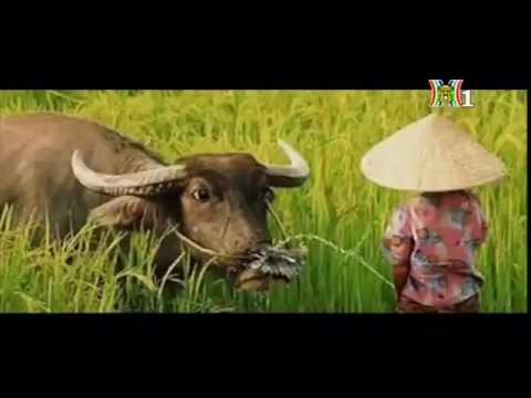 Em bé quê - Quỳnh Như( Clb Sun Kids )