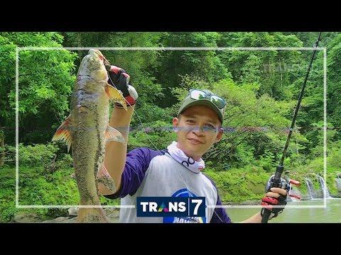 mancing-mania---predator-ompong-sungai-geumpang-(10/9/16)-3-2