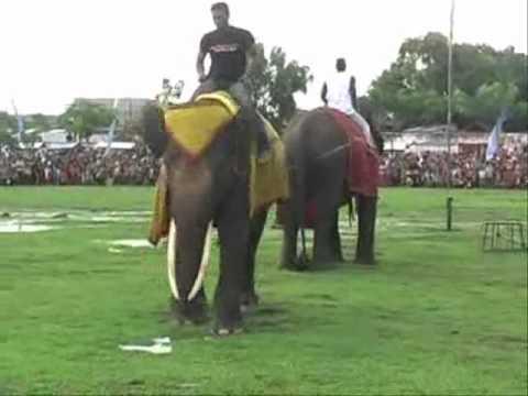 Gajah Menggila Chaiya-Chaiya