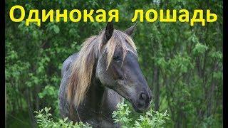 Одинокая лошадь. Возможные проблемы.