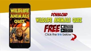 Wild Animals Quiz - Educational Trivia Discover Amazing Land & Ocean Creatures Facts