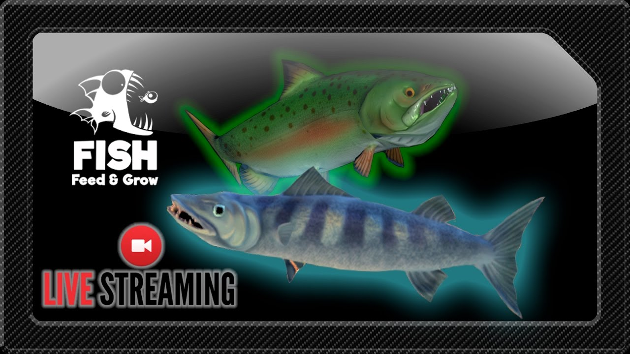 Barracuda and salmon feed and grow fish new update for Feed and grow fish online
