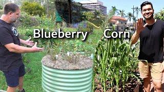 6 Food Growing Examples in Birdies Beds with Epic Gardening