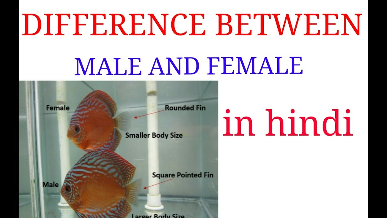 Difference Between Male And Female In Discuss Fish,,In -3737