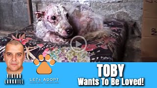 Hope Rescues Scared Puppy Toby From Chicken Coop - @Viktor Larkhill Extreme Rescue