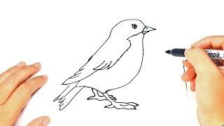 How to draw a Bird | Bird Easy Draw Tutorial