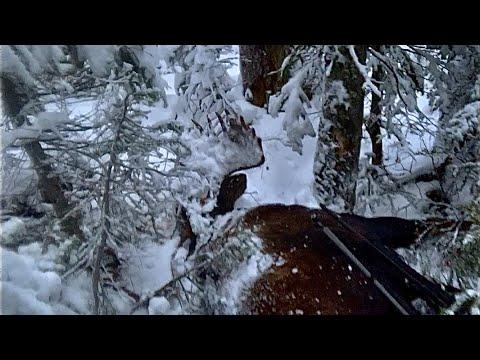 2020 moose hunt