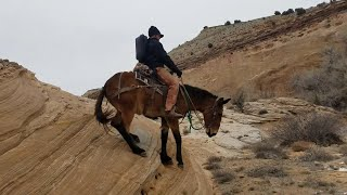 EXTREME MULE RIDING- Winter Edition