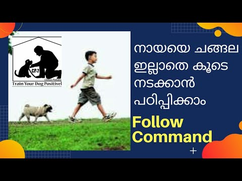 dog-training-malayalam-|-walk-without-a-leash-|-tutorial