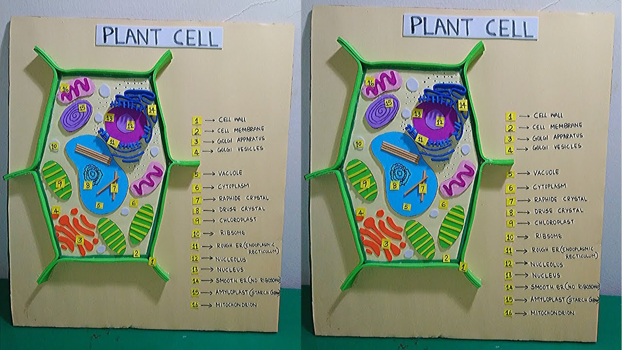 Plant Cell Model For Students   Plant Cell 3D Model ...