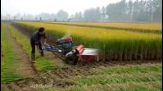Rice Reaper, Wheat Reaper, Rice Reaper India, Rice Cutting Machine
