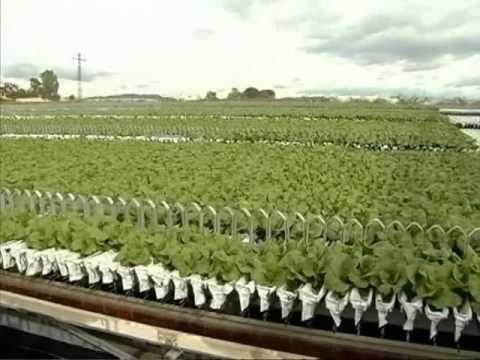 sistema hidroponico para el cultivo de vegetales