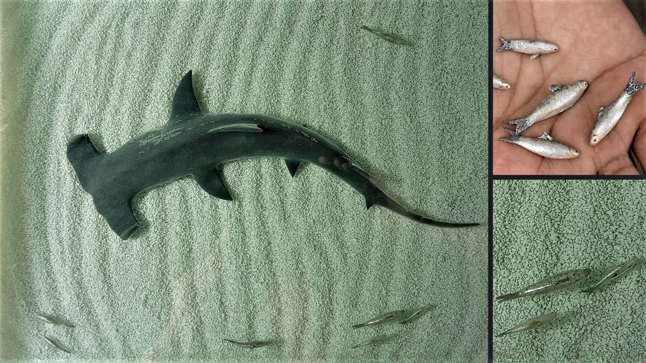 How to Make Hammerhead Shark Diorama | Resin Art
