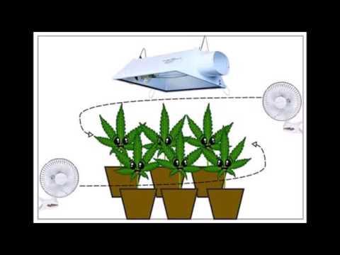 Increasing Cannabis Growth Rates
