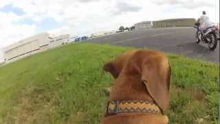 Lionus The Dog Chasing A Motorcycle