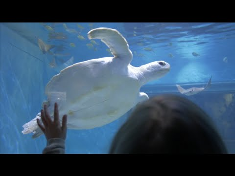 Toledo Zoo Summer Highlight 2015