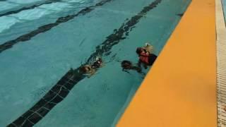 仲良し水泳大会から一転、みんな必死です   「おまめちゃん、ごめんね  ...