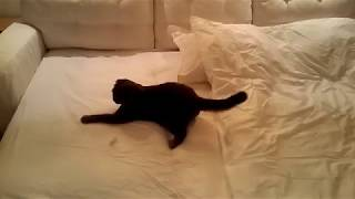 Кот Нэко играет на постели