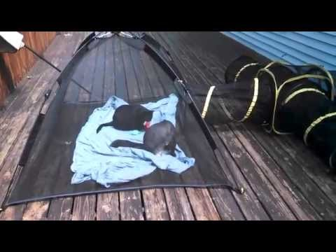 ABO Gear Cat Tent and Tunnel Review & ABO Gear Cat Tent and Tunnel Review - YouTube