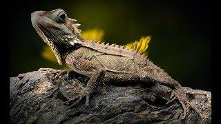 Australien Naturdokumentation, deutsch, Naturdoku, Tierdoku *kostenlose Naturdokus online*