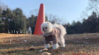 겨울일상브이로그 젤리산책 미싱으로 강아지옷고치기 하루에…