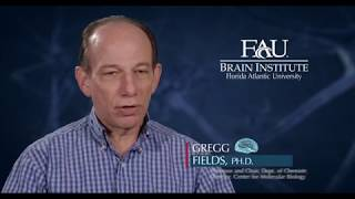 FAU Faculty Vignette – Gregg Fields, Ph.D.