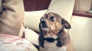 Собаку ругают а она всё понимает