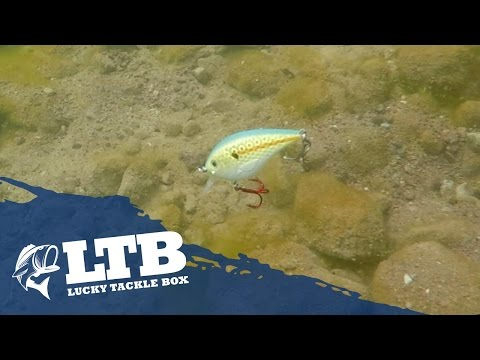 Crankbait Fishing for Spring Time Bass