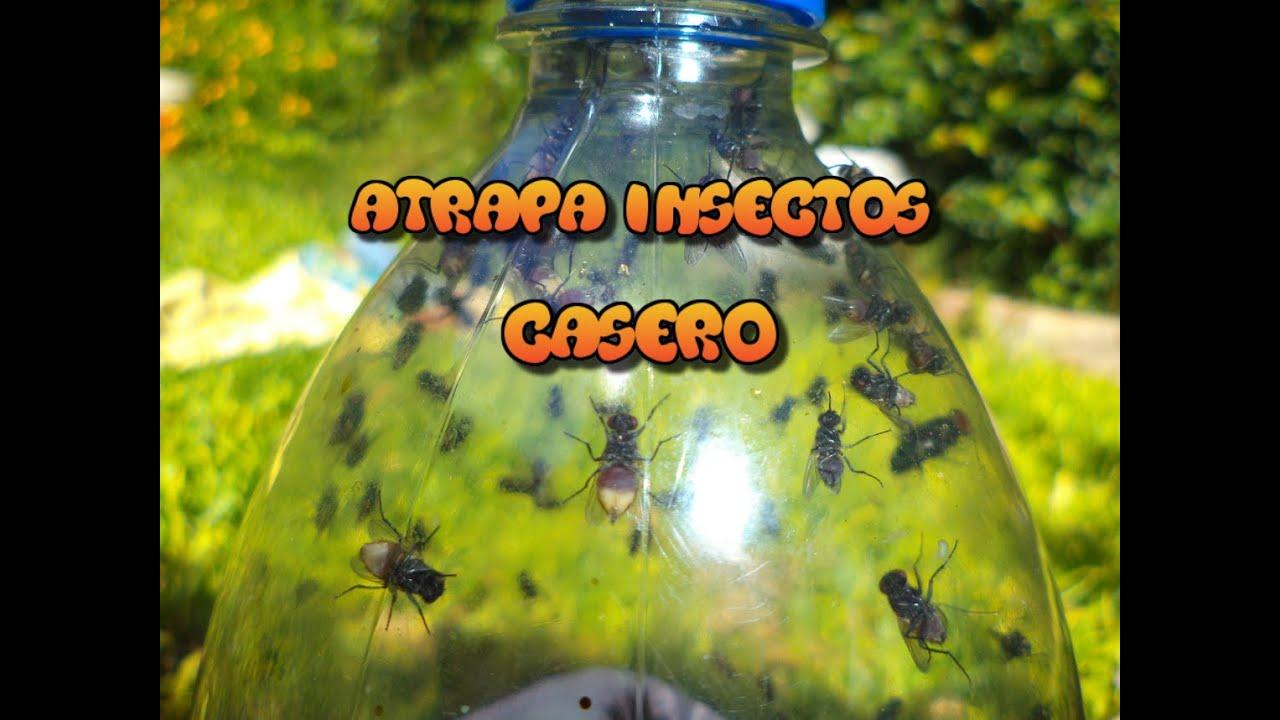Experimentos caseros trampa para moscas casera youtube - Trampa casera para moscas ...