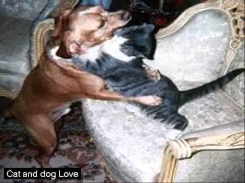 Funny Cat And Dog Love Gif Funny Video And Cute Hd Youtube